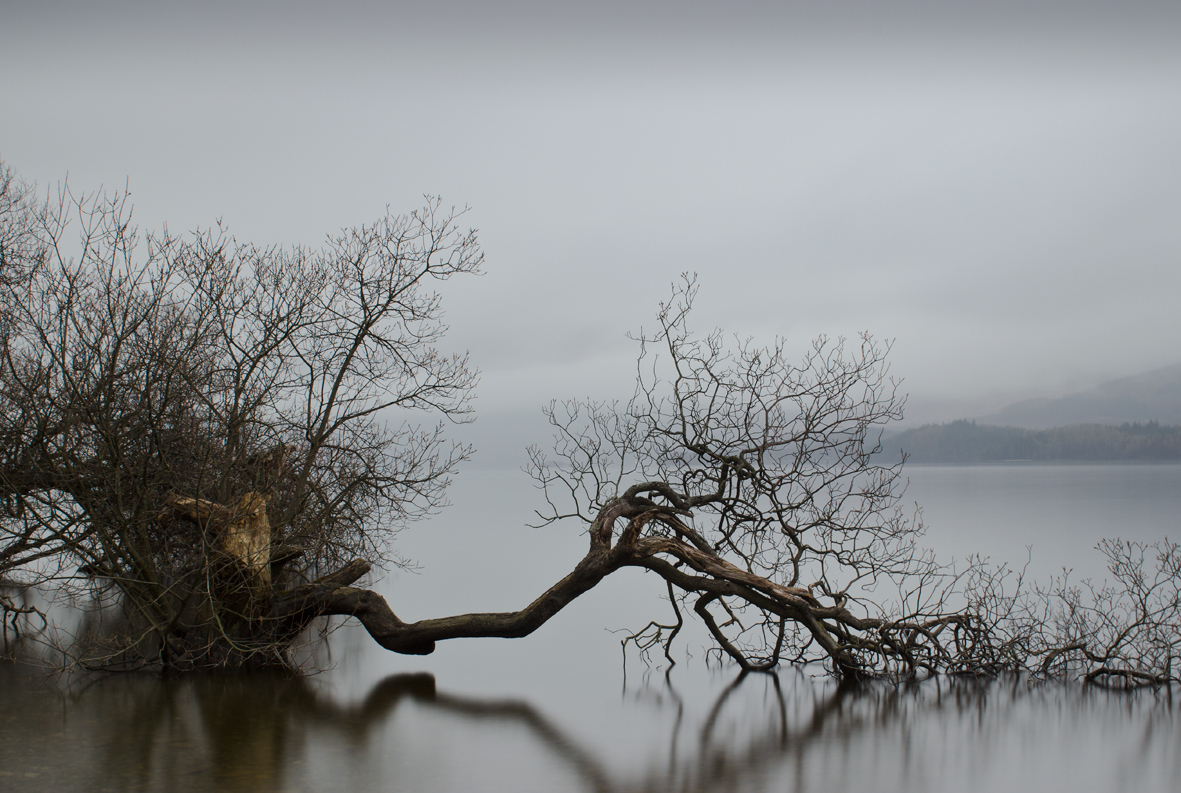 tree Loch Lomond Scotland mist